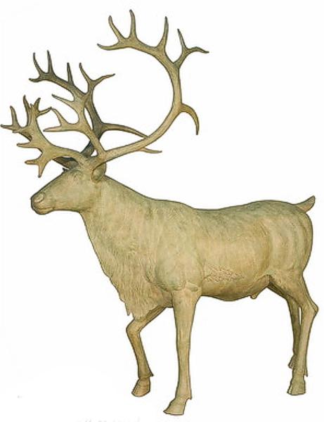 Bronze Caribou Reindeer Statue - AF 74390GR